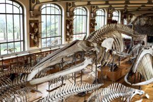 museum_insurance_industries